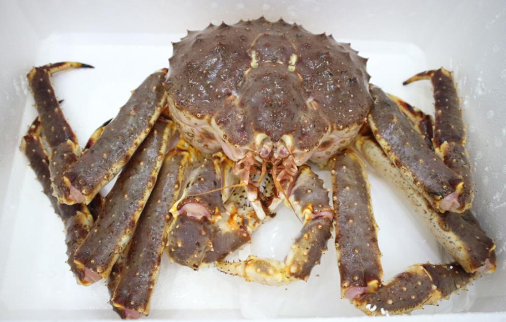 cua hoàng đế alaska king crab