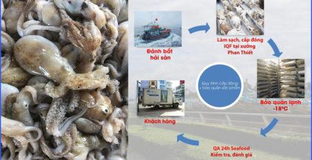 quy trình sản xuất bạch tuộc baby đông lạnh