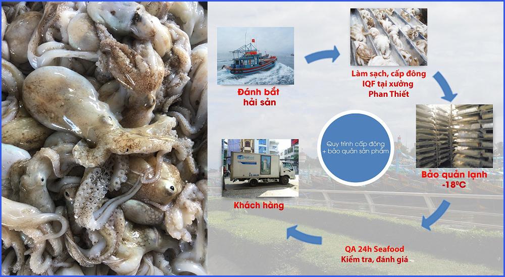 quy trình sản xuất bạch tuộc đông lạnh