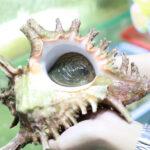 ốc gai sống
